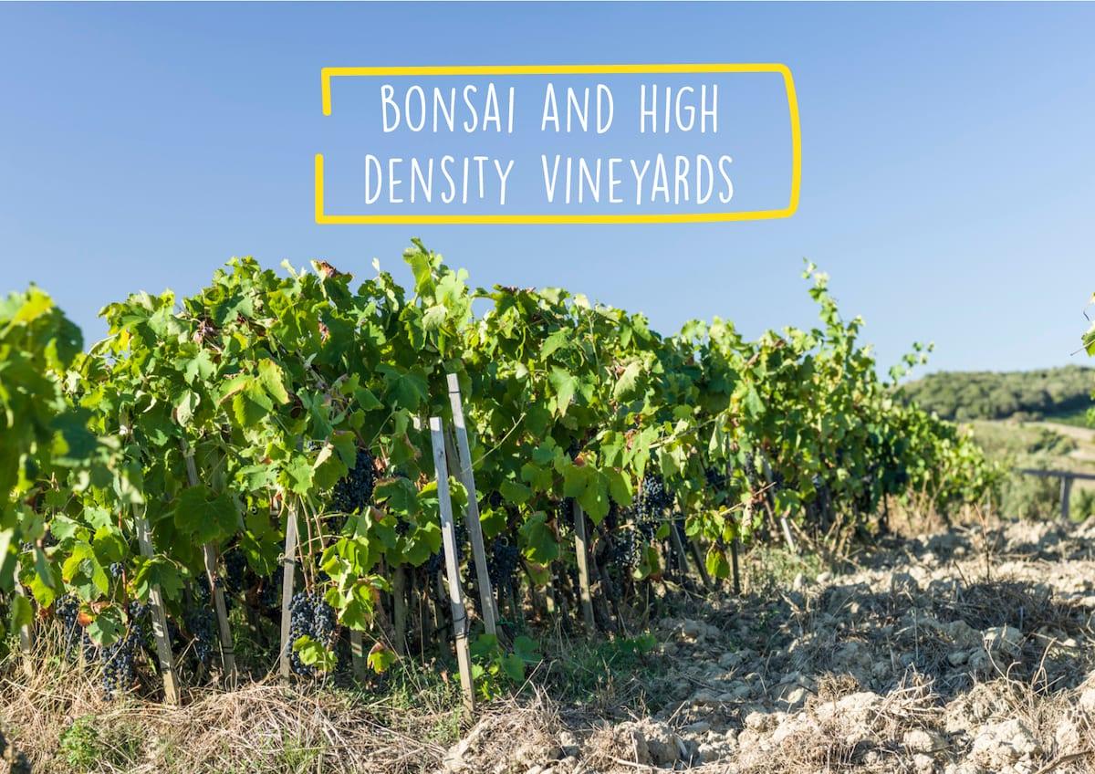 Bonsai and high density vineyards