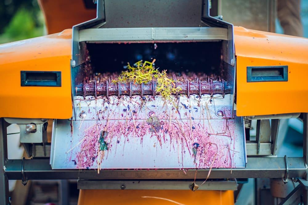 Montalcino wines harvest at Podere Le Ripi