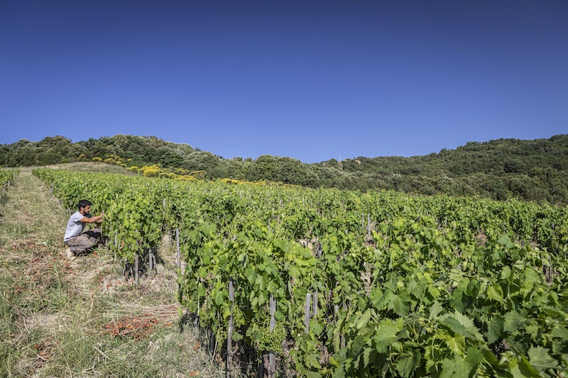 A true taste of Tuscany: private cooking classes and bottles of Brunello