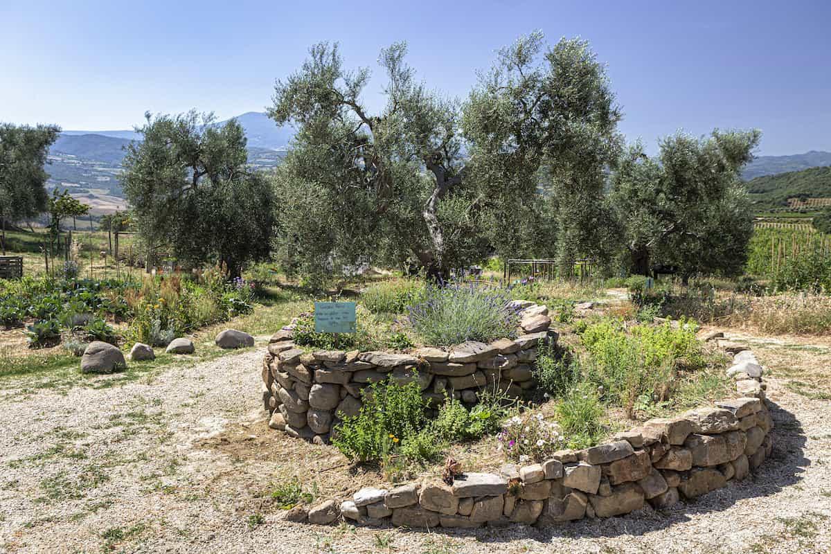 Biodynamic Winery in Montalcino