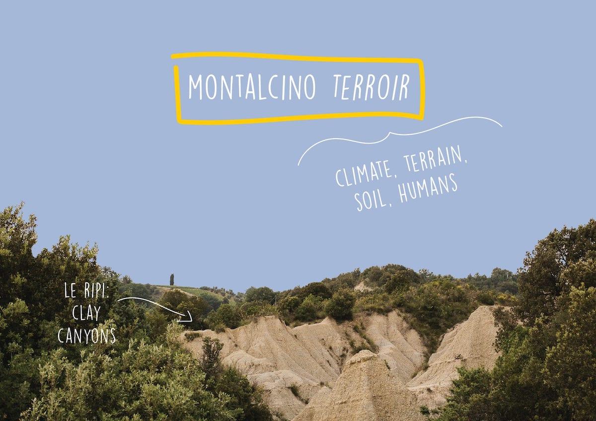 Montalcino Terroir