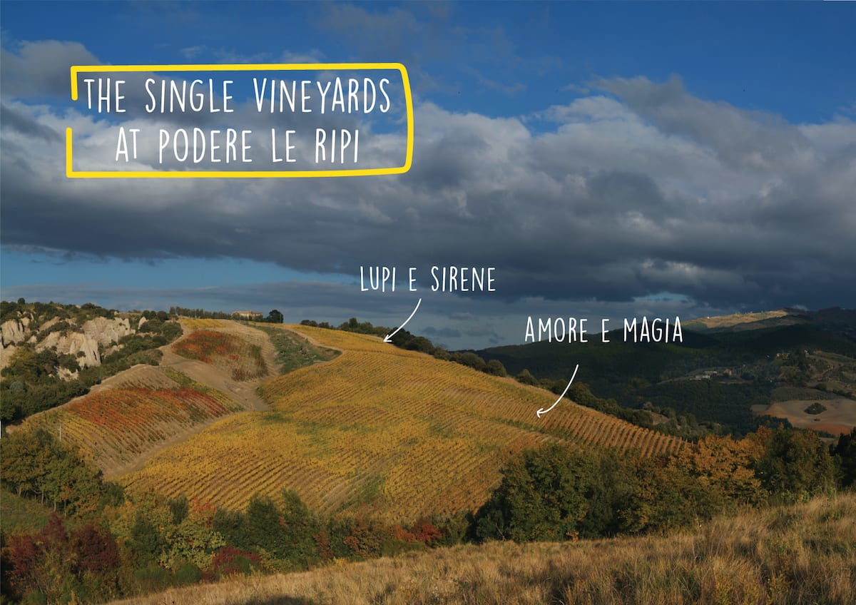 The single vineyards at Podere Le Ripi